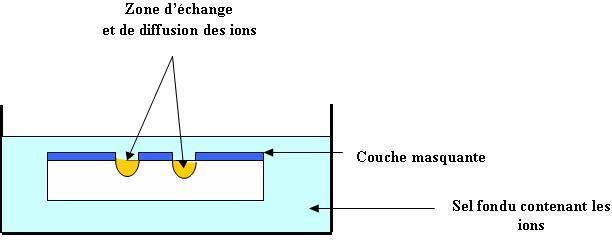 Zone d'échange et de diffusion des ions