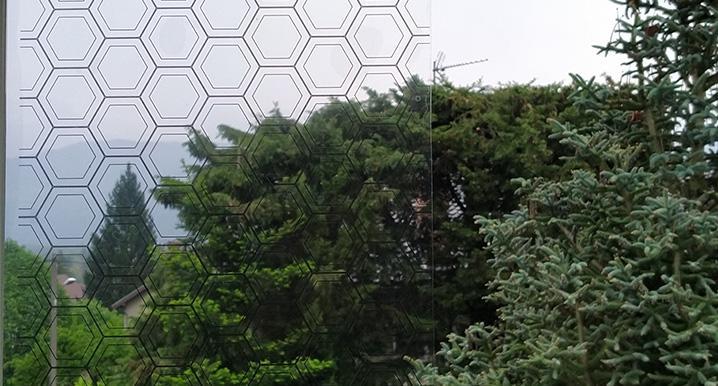 Lichens Stay online indoors