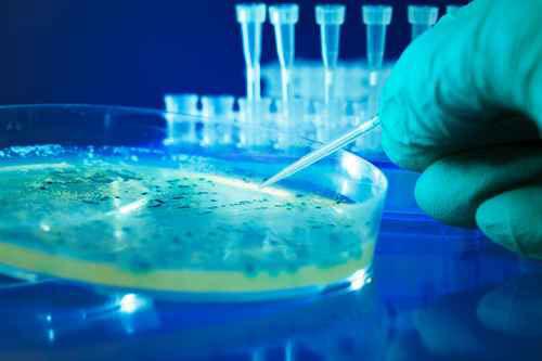 Rôle de la communication et des facteurs environnementaux dans l'adaptation et la virulence bactérienne